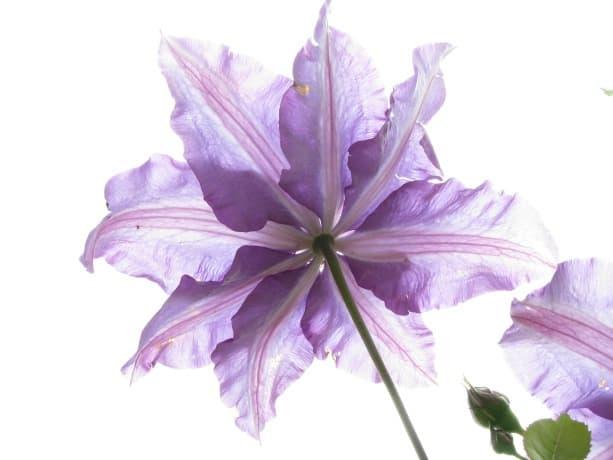 flower-123766