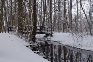 snow-41867