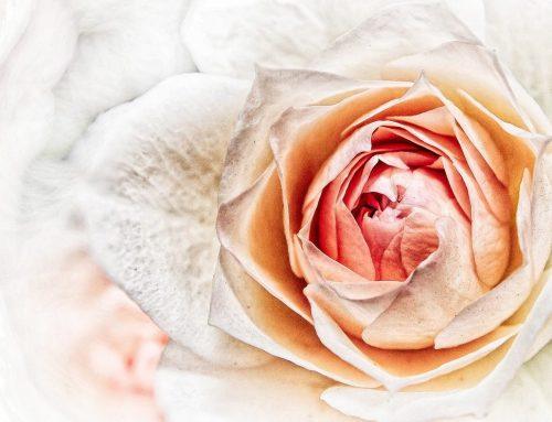 Die Schönheit deines Wesens