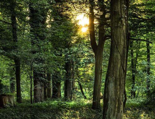 Erwachen – Eine Naturmetapher und mehr