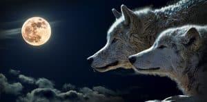 La Louve die Wölfin