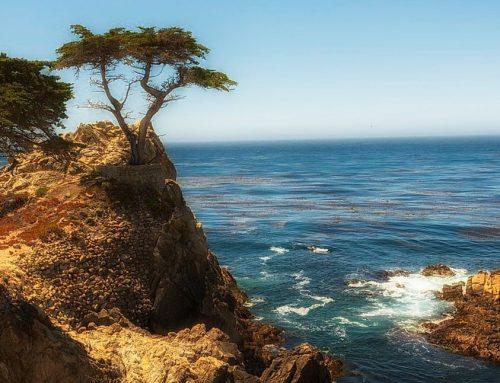 Die Zypresse und das Meer
