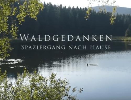 Waldgedanken (Videoclip)