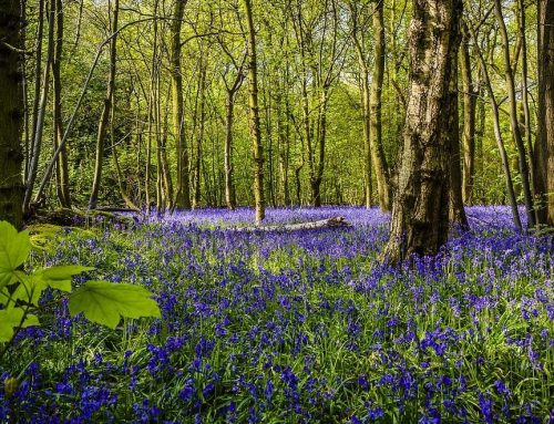 Faszination Wald – Quelle des Grünen Glücks