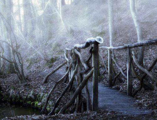 Finde die Brücken – Mut zu neuen Wegen