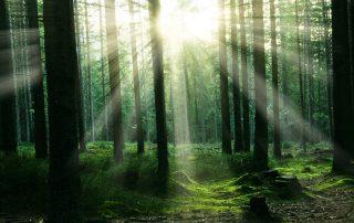 Waldgedanken