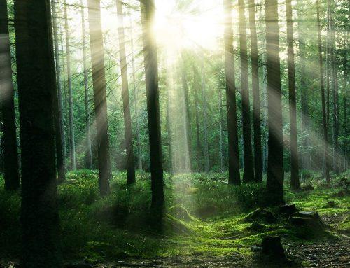 Waldgedanken – Spaziergang nach Hause
