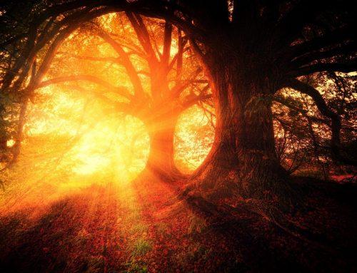 Waldsinfonie – Ein Baum erzählt